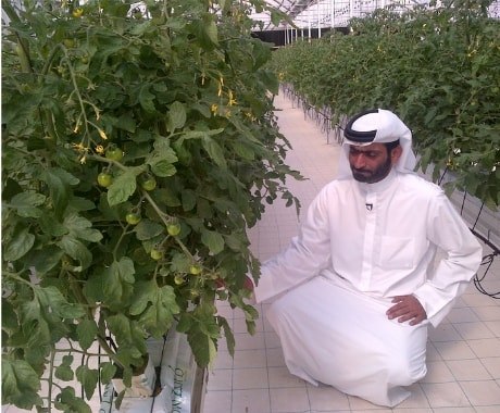 Abu Dhabi 5 weeks