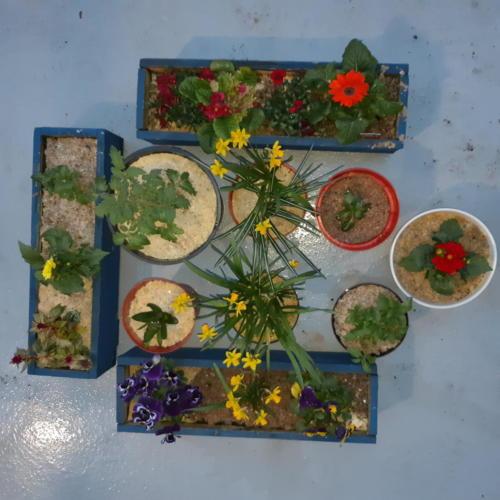 Overhead Plants