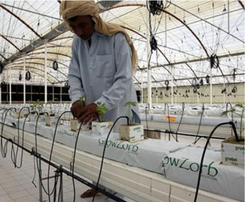 Abu Dhabi Farmer